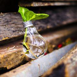 Gloeilamp met een groen blad